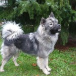 Ayscha mit einem Jahr