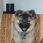 Cyra mit 2 Monaten