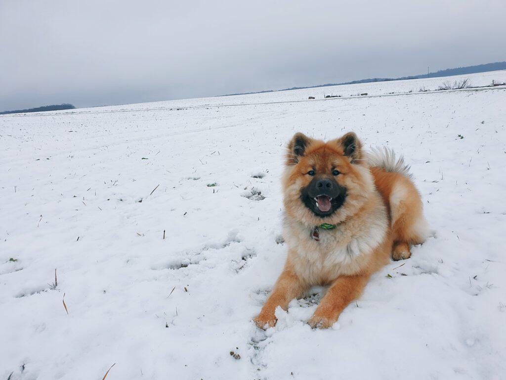 Fargo-Chico_1